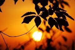 sunrise007